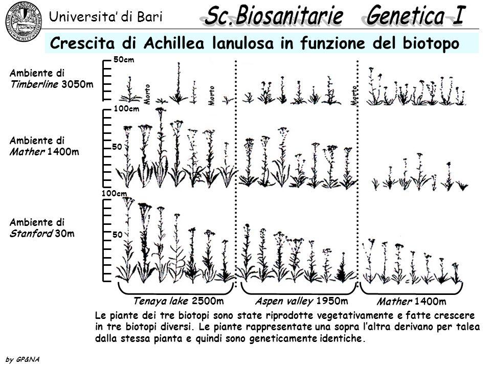 Universita' di Bari by GP&NA Crescita di Achillea lanulosa in funzione del biotopo 50cm 100cm 50 100cm 50 Ambiente di Timberline 3050m Ambiente di Mat