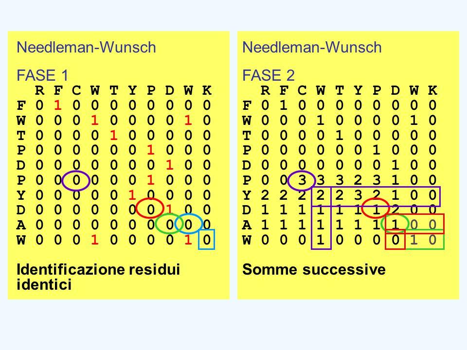 Needleman-Wunsch FASE 1 R F C W T Y P D W K F 0 1 0 0 0 0 0 0 0 0 W 0 0 0 1 0 0 0 0 1 0 T 0 0 0 0 1 0 0 0 0 0 P 0 0 0 0 0 0 1 0 0 0 D 0 0 0 0 0 0 0 1 0 0 P 0 0 0 0 0 0 1 0 0 0 Y 0 0 0 0 0 1 0 0 0 0 D 0 0 0 0 0 0 0 1 0 0 A 0 0 0 0 0 0 0 0 0 0 W 0 0 0 1 0 0 0 0 1 0 Identificazione residui identici Needleman-Wunsch FASE 2 R F C W T Y P D W K F 0 1 0 0 0 0 0 0 0 0 W 0 0 0 1 0 0 0 0 1 0 T 0 0 0 0 1 0 0 0 0 0 P 0 0 0 0 0 0 1 0 0 0 D 0 0 0 0 0 0 0 1 0 0 P 0 0 3 3 3 2 3 1 0 0 Y 2 2 2 2 2 3 2 1 0 0 D 1 1 1 1 1 1 1 2 0 0 A 1 1 1 1 1 1 1 1 0 0 W 0 0 0 1 0 0 0 0 1 0 Somme successive