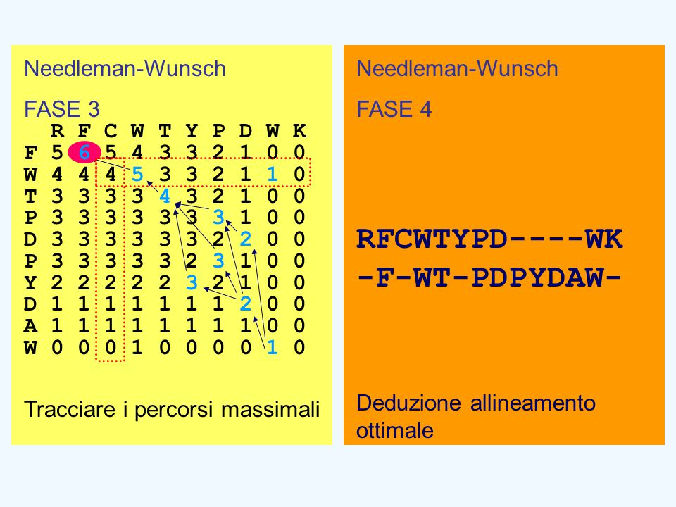 Needleman-Wunsch FASE 4 RFCWTYPD----WK -F-WT-PDPYDAW- Deduzione allineamento ottimale Needleman-Wunsch FASE 3 R F C W T Y P D W K F 5 6 5 4 3 3 2 1 0 0 W 4 4 4 5 3 3 2 1 1 0 T 3 3 3 3 4 3 2 1 0 0 P 3 3 3 3 3 3 3 1 0 0 D 3 3 3 3 3 3 2 2 0 0 P 3 3 3 3 3 2 3 1 0 0 Y 2 2 2 2 2 3 2 1 0 0 D 1 1 1 1 1 1 1 2 0 0 A 1 1 1 1 1 1 1 1 0 0 W 0 0 0 1 0 0 0 0 1 0 Tracciare i percorsi massimali