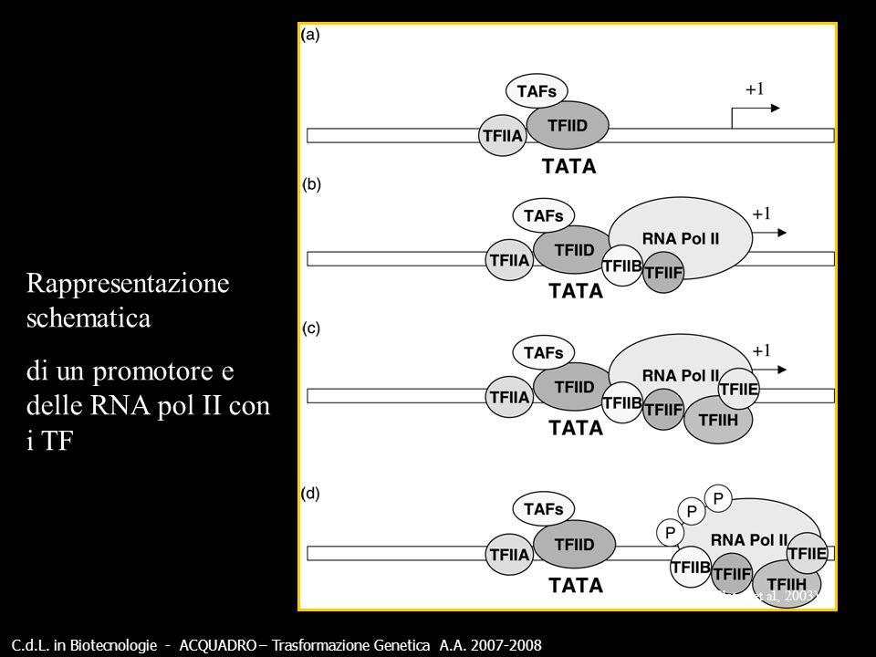 C.d.L. in Biotecnologie - ACQUADRO – Trasformazione Genetica A.A. 2007-2008 (Slater et al, 2003) Rappresentazione schematica di un promotore e delle R