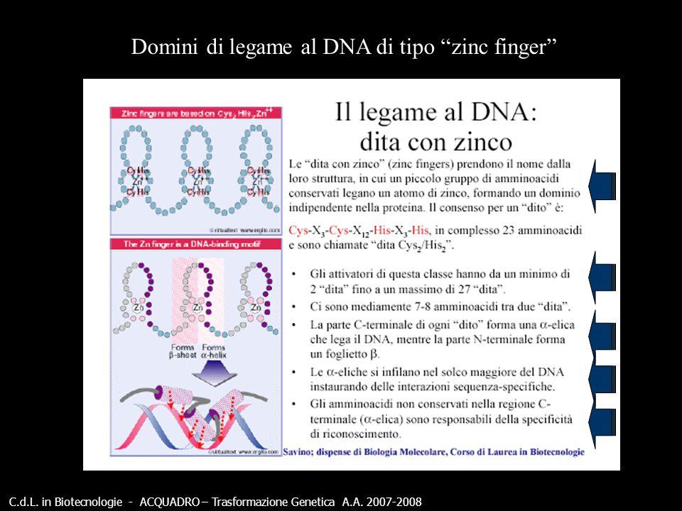C.d.L.in Biotecnologie - ACQUADRO – Trasformazione Genetica A.A.