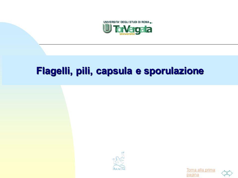 Torna alla prima pagina Flagelli, pili, capsula e sporulazione