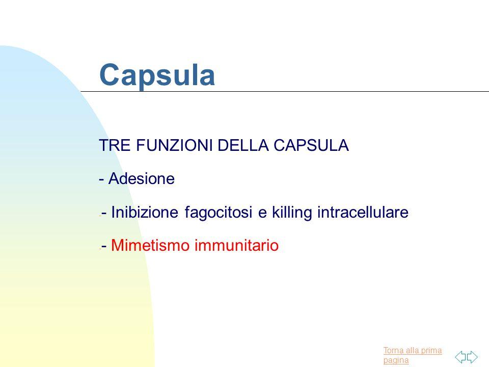 Torna alla prima pagina Capsula TRE FUNZIONI DELLA CAPSULA - Adesione - - Inibizione fagocitosi e killing intracellulare - - Mimetismo immunitario