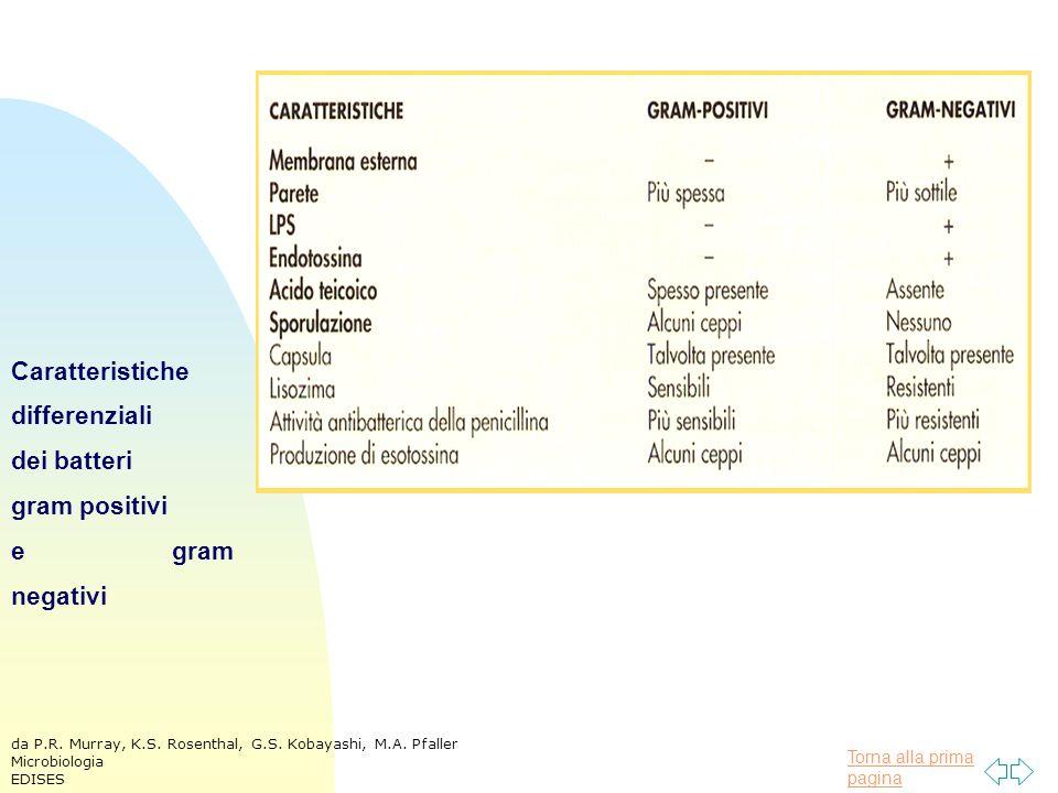 Torna alla prima pagina Caratteristiche differenziali dei batteri gram positivi e gram negativi da P.R.