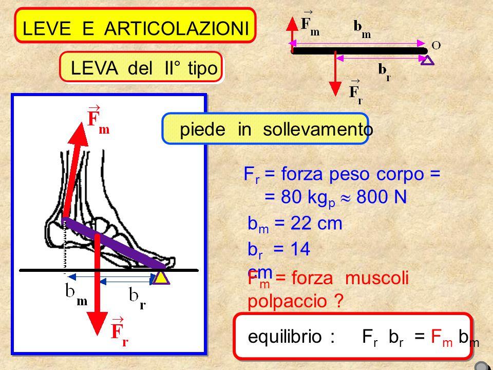 10 LEVE E ARTICOLAZIONI F r = forza peso corpo = = 80 kg p  800 N b m = 22 cm b r = 14 cm F m = forza muscoli polpaccio .