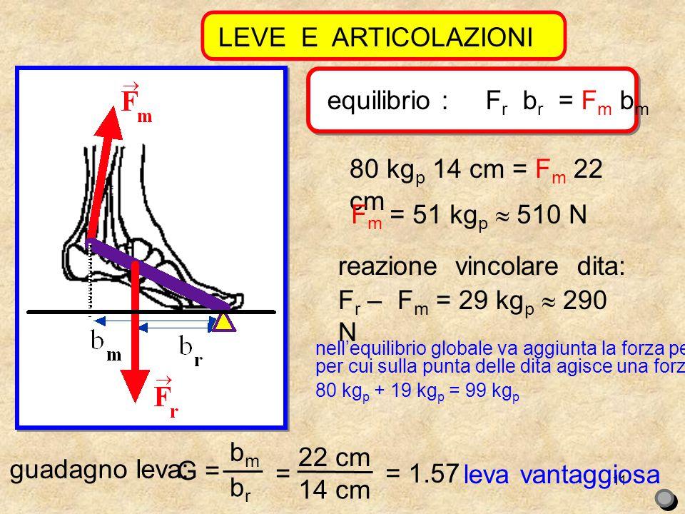 11 LEVE E ARTICOLAZIONI equilibrio : F r b r = F m b m guadagno leva: G = bmbm brbr = 22 cm 14 cm = 1.57 leva vantaggiosa 80 kg p 14 cm = F m 22 cm F m = 51 kg p  510 N reazione vincolare dita: F r – F m = 29 kg p  290 N nell'equilibrio globale va aggiunta la forza peso, per cui sulla punta delle dita agisce una forza di 80 kg p + 19 kg p = 99 kg p