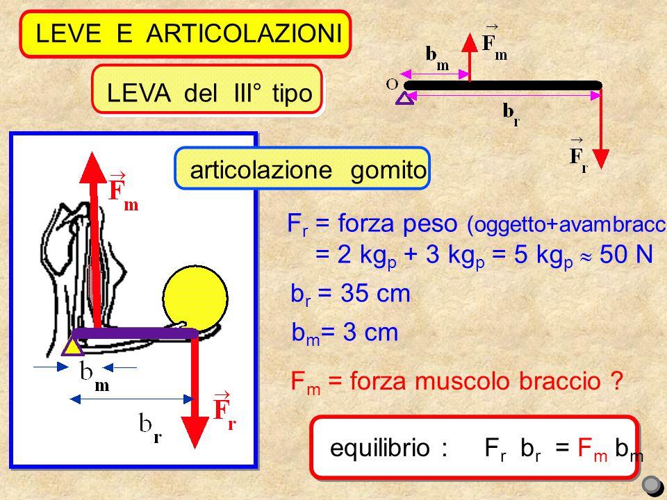 13 LEVE E ARTICOLAZIONI equilibrio : F r b r = F m b m LEVA del III° tipo F r = forza peso (oggetto+avambraccio) = = 2 kg p + 3 kg p = 5 kg p  50 N F m = forza muscolo braccio .