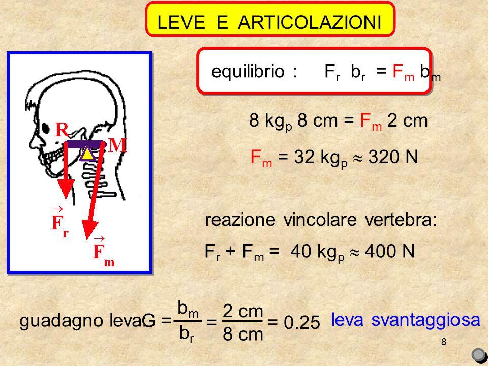8 8 kg p 8 cm = F m 2 cm F m = 32 kg p  320 N reazione vincolare vertebra: F r + F m = 40 kg p  400 N LEVE E ARTICOLAZIONIequilibrio : F r b r = F m b m guadagno leva: G = bmbm brbr = 2 cm 8 cm = 0.25 leva svantaggiosa