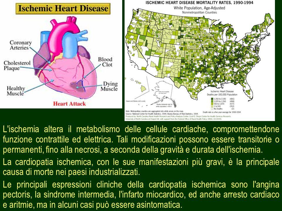 12 L'ischemia altera il metabolismo delle cellule cardiache, compromettendone funzione contrattile ed elettrica. Tali modificazioni possono essere tra