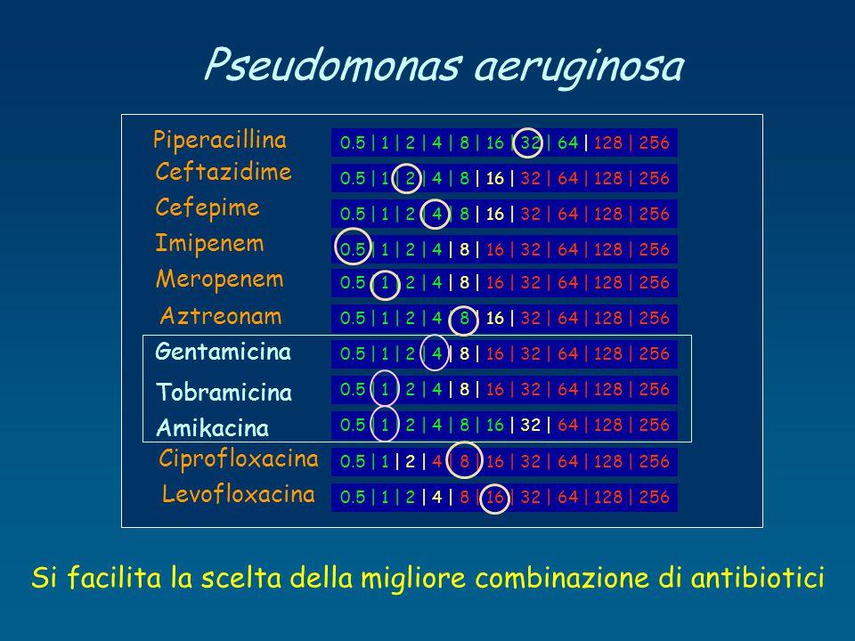 Pseudomonas aeruginosa 0.5 | 1 | 2 | 4 | 8 | 16 | 32 | 64 | 128 | 256 Piperacillina Ceftazidime Cefepime Imipenem Meropenem Aztreonam Gentamicina Tobr