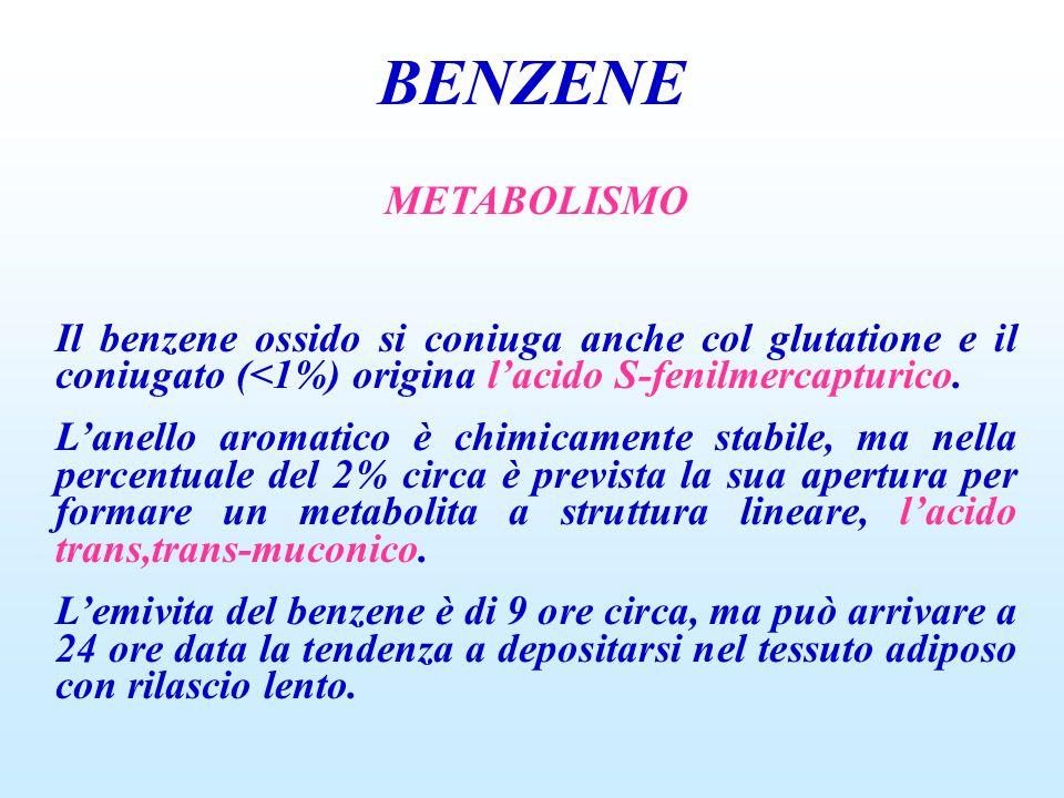 BENZENE METABOLISMO Il benzene ossido si coniuga anche col glutatione e il coniugato (<1%) origina l'acido S-fenilmercapturico.