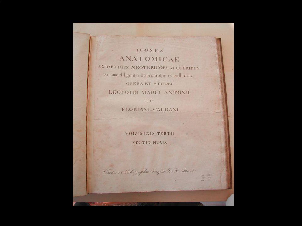 Marina Cimino - Biblioteca Dip. Scienze Ginecologiche39