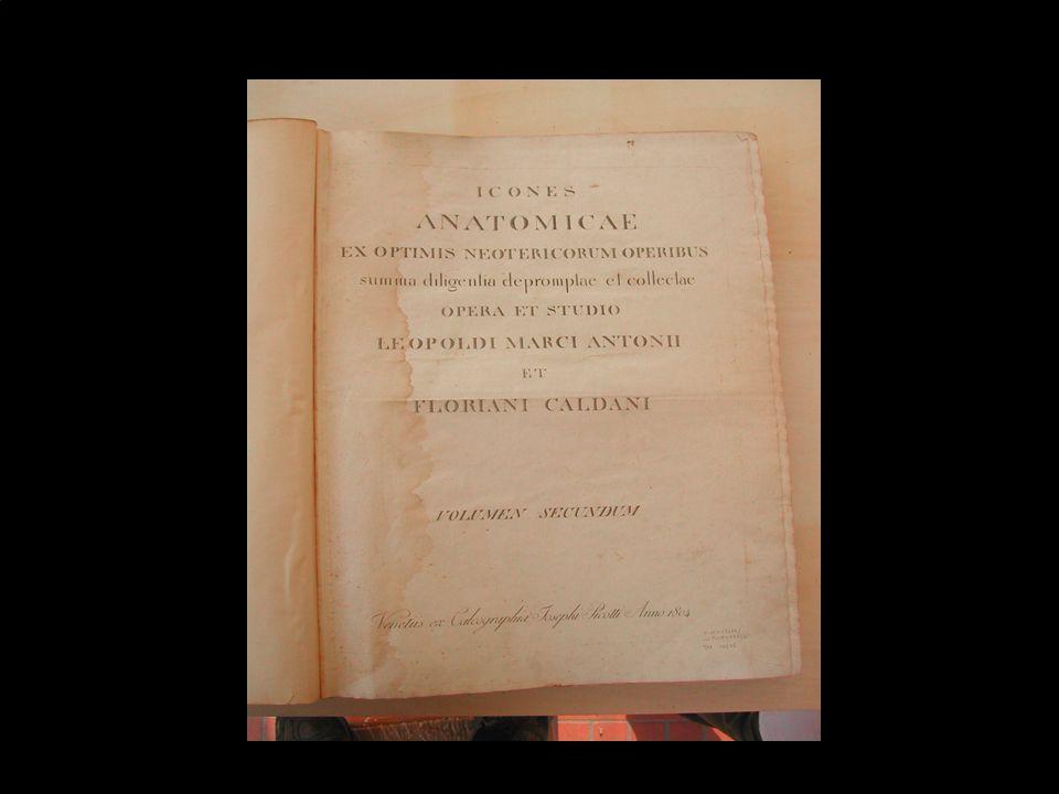 Marina Cimino - Biblioteca Dip. Scienze Ginecologiche40