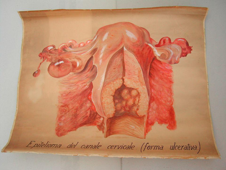 Marina Cimino - Biblioteca Dip. Scienze Ginecologiche41