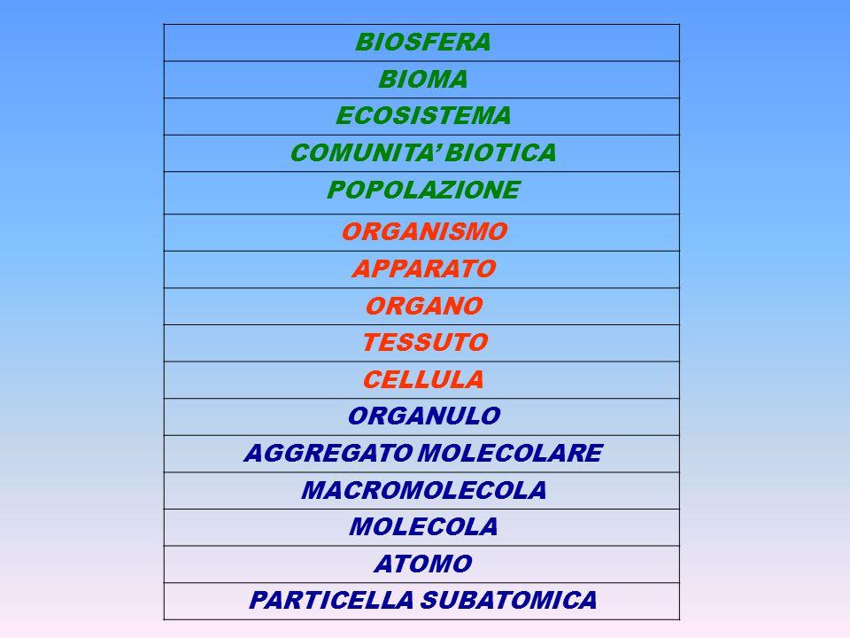 BIOSFERA BIOMA ECOSISTEMA COMUNITA' BIOTICA POPOLAZIONE ORGANISMO APPARATO ORGANO TESSUTO CELLULA ORGANULO AGGREGATO MOLECOLARE MACROMOLECOLA MOLECOLA