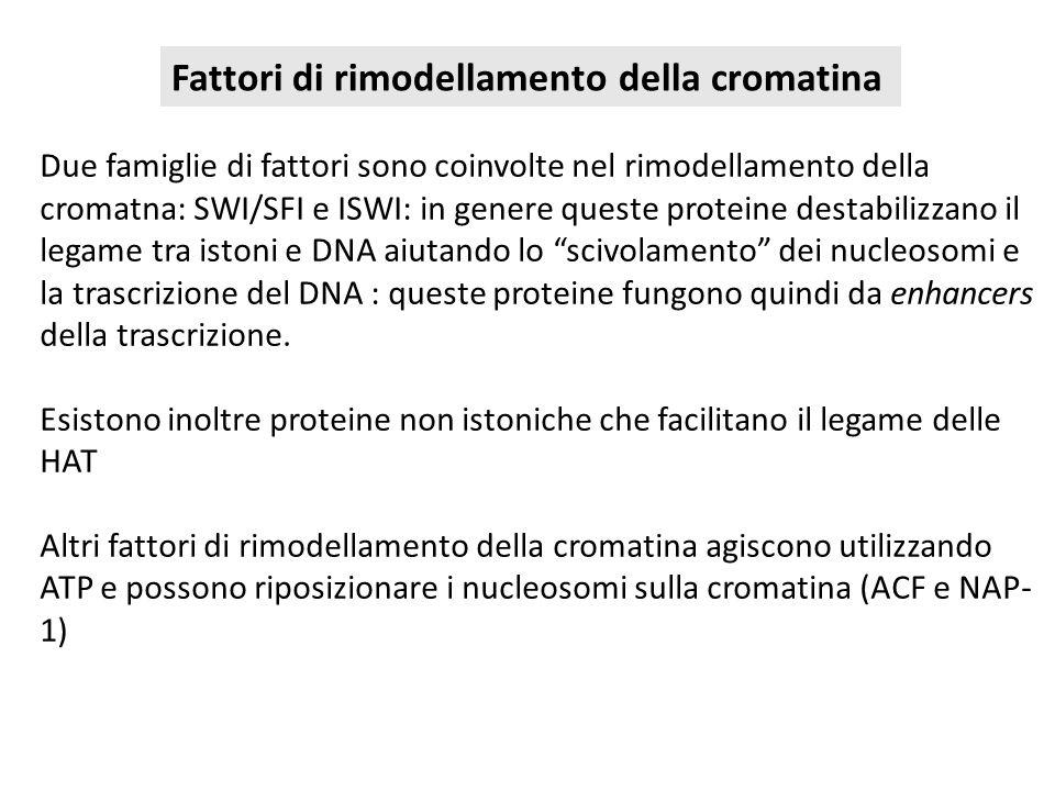 Due famiglie di fattori sono coinvolte nel rimodellamento della cromatna: SWI/SFI e ISWI: in genere queste proteine destabilizzano il legame tra istoni e DNA aiutando lo scivolamento dei nucleosomi e la trascrizione del DNA : queste proteine fungono quindi da enhancers della trascrizione.