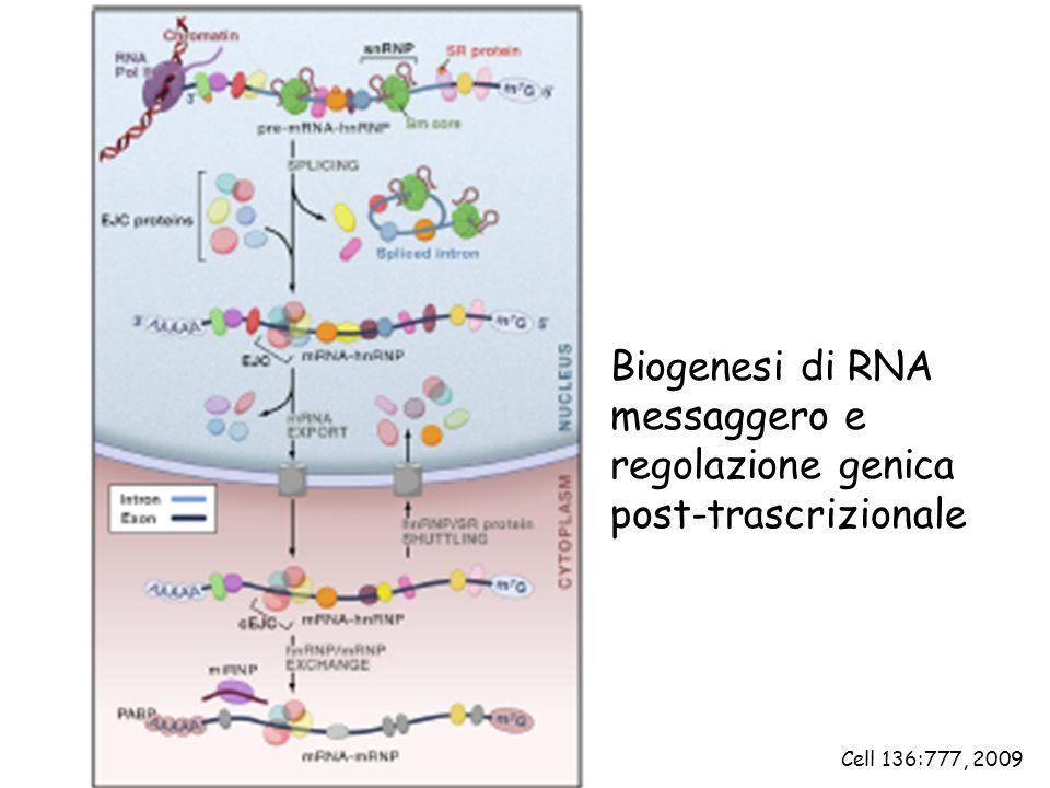 Biogenesi di RNA messaggero e regolazione genica post-trascrizionale Cell 136:777, 2009