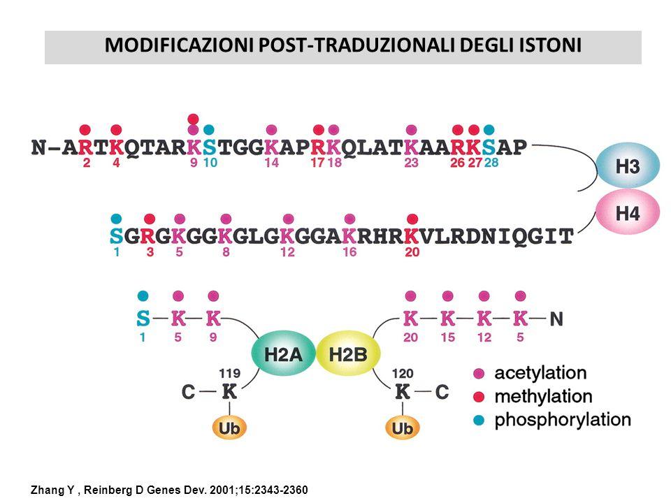 MODIFICAZIONI POST-TRADUZIONALI DEGLI ISTONI Zhang Y, Reinberg D Genes Dev. 2001;15:2343-2360