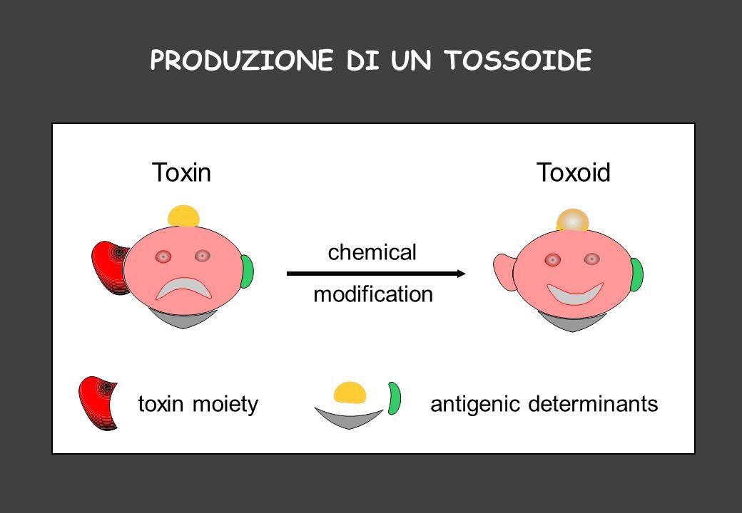 toxin moietyantigenic determinants chemical modification ToxinToxoid PRODUZIONE DI UN TOSSOIDE