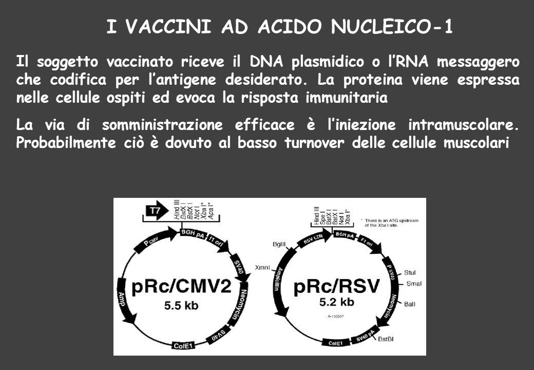 I VACCINI AD ACIDO NUCLEICO-1 Il soggetto vaccinato riceve il DNA plasmidico o l'RNA messaggero che codifica per l'antigene desiderato. La proteina vi