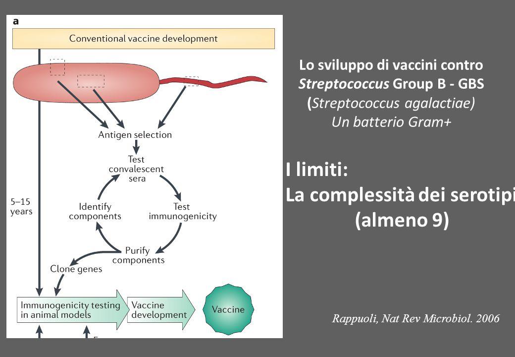 I limiti: La complessità dei serotipi (almeno 9) Lo sviluppo di vaccini contro Streptococcus Group B - GBS (Streptococcus agalactiae) Un batterio Gram