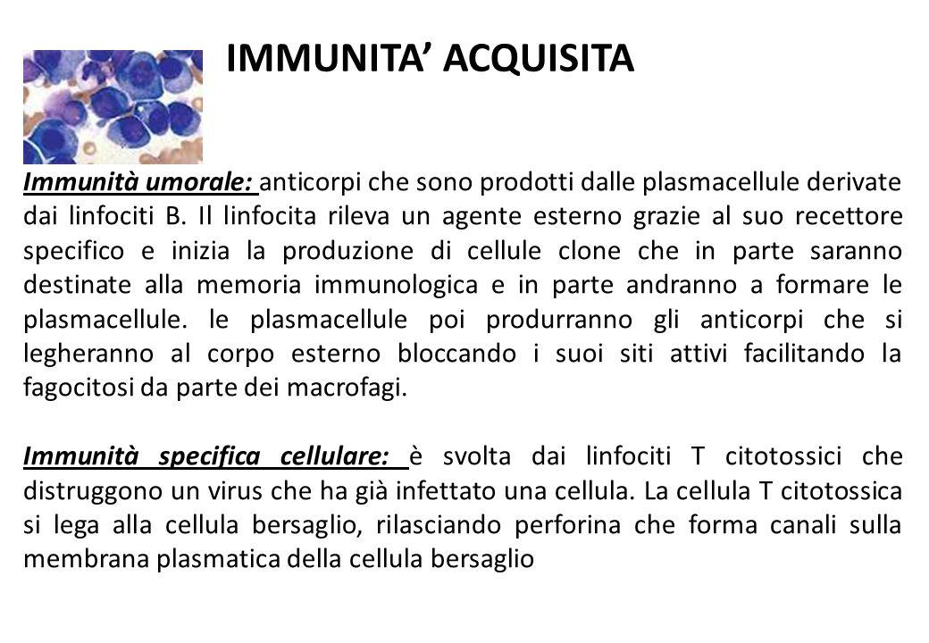 Immunità umorale: anticorpi che sono prodotti dalle plasmacellule derivate dai linfociti B. Il linfocita rileva un agente esterno grazie al suo recett