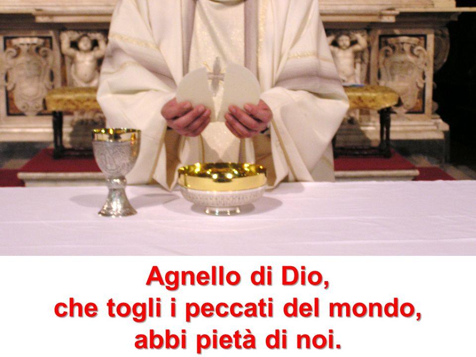 Agnello di Dio, che togli i peccati del mondo, abbi pietà di noi.
