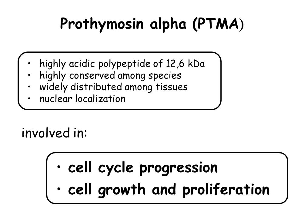Prothymosin alpha (PTMA  highly acidic polypeptide of 12,6 kDa highly conserved among species widely distributed among tissues nuclear localization cell cycle progression cell growth and proliferation involved in:
