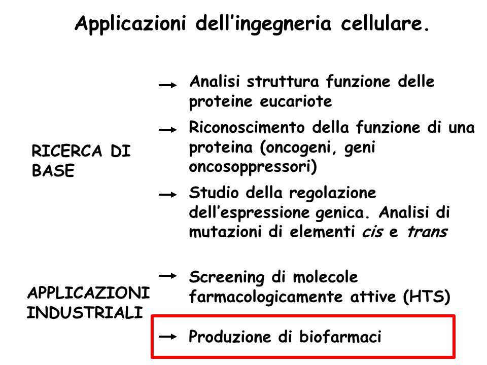 Applicazioni dell'ingegneria cellulare. RICERCA DI BASE APPLICAZIONI INDUSTRIALI Screening di molecole farmacologicamente attive (HTS) Produzione di b