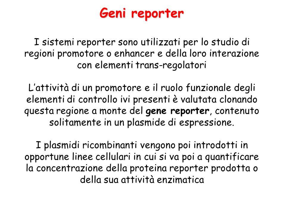 Geni reporter I sistemi reporter sono utilizzati per lo studio di regioni promotore o enhancer e della loro interazione con elementi trans-regolatori