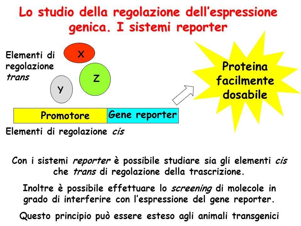 Lo studio della regolazione dell'espressione genica. I sistemi reporter Con i sistemi reporter è possibile studiare sia gli elementi cis che trans di