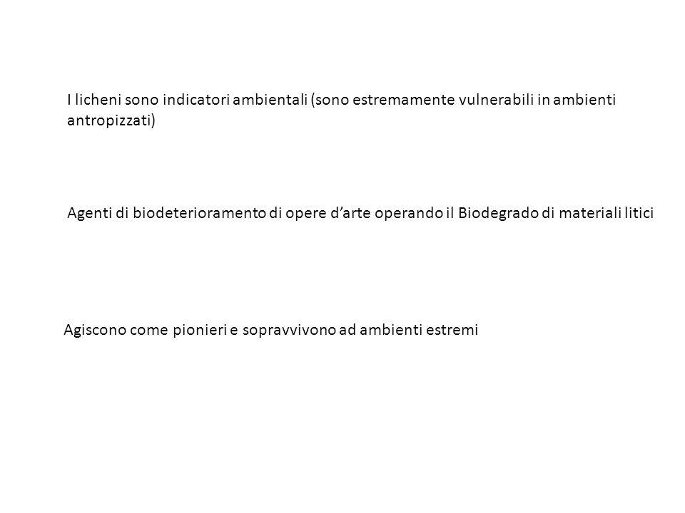 I licheni sono indicatori ambientali (sono estremamente vulnerabili in ambienti antropizzati) Agenti di biodeterioramento di opere d'arte operando il