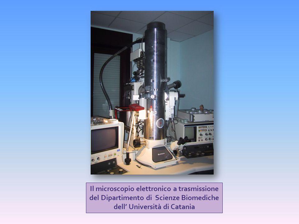 Il microscopio elettronico a trasmissione del Dipartimento di Scienze Biomediche dell' Università di Catania