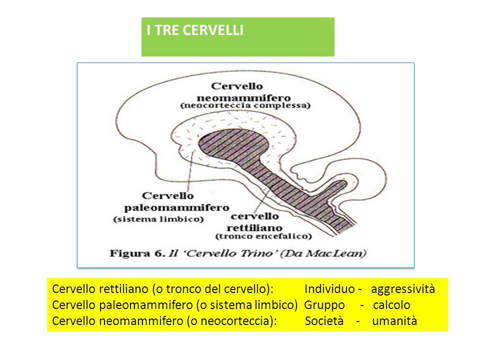 I TRE CERVELLI Cervello rettiliano (o tronco del cervello): Individuo - aggressività Cervello paleomammifero (o sistema limbico) Gruppo - calcolo Cervello neomammifero (o neocorteccia): Società - umanità