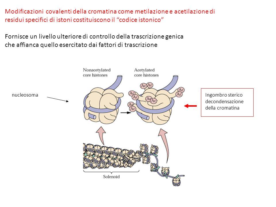 """Modificazioni covalenti della cromatina come metilazione e acetilazione di residui specifici di istoni costituiscono il """"codice istonico"""" Fornisce un"""