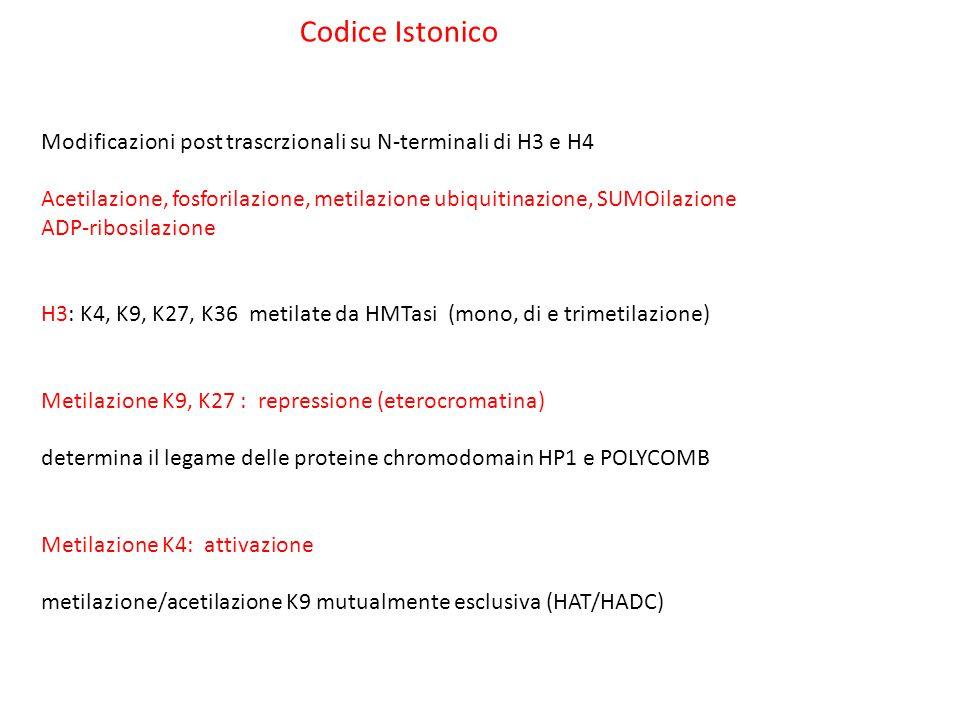 Codice Istonico Modificazioni post trascrzionali su N-terminali di H3 e H4 Acetilazione, fosforilazione, metilazione ubiquitinazione, SUMOilazione ADP
