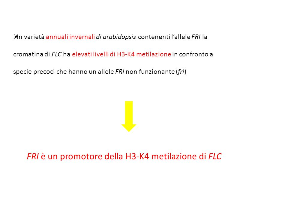 FRI è un promotore della H3-K4 metilazione di FLC  In varietà annuali invernali di arabidopsis contenenti l'allele FRI la cromatina di FLC ha elevati