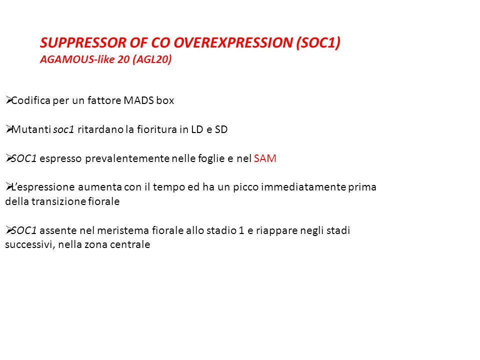 SUPPRESSOR OF CO OVEREXPRESSION (SOC1) AGAMOUS-like 20 (AGL20)  Codifica per un fattore MADS box  Mutanti soc1 ritardano la fioritura in LD e SD  S
