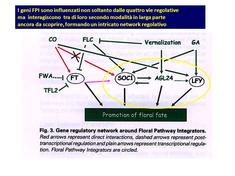 I geni FPI sono influenzati non soltanto dalle quattro vie regolative ma interagiscono tra di loro secondo modalità in larga parte ancora da scoprire,