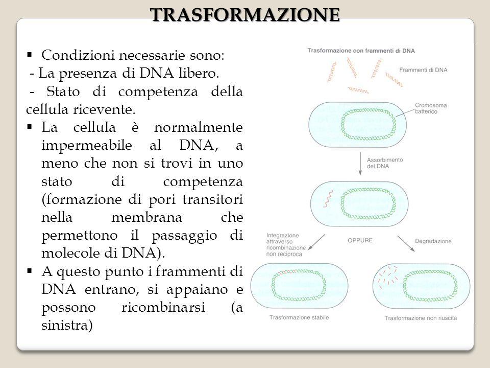  Condizioni necessarie sono: - La presenza di DNA libero. - Stato di competenza della cellula ricevente.  La cellula è normalmente impermeabile al D