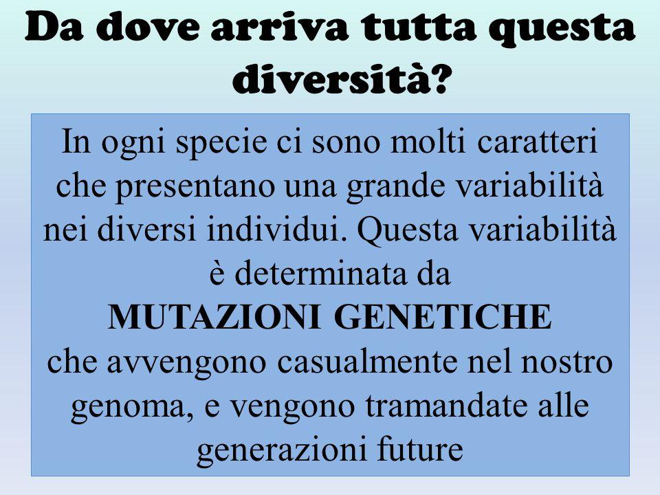 Da dove arriva tutta questa diversità? In ogni specie ci sono molti caratteri che presentano una grande variabilità nei diversi individui. Questa vari
