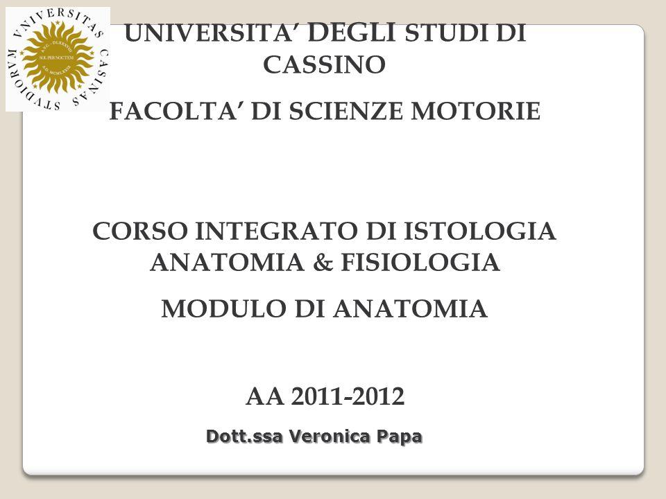 UNIVERSITA' DEGLI STUDI DI CASSINO FACOLTA' DI SCIENZE MOTORIE CORSO INTEGRATO DI ISTOLOGIA ANATOMIA & FISIOLOGIA MODULO DI ANATOMIA AA 2011-2012 Dott.ssa Veronica Papa