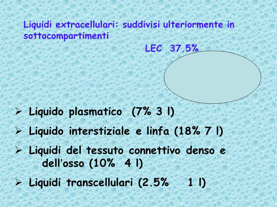 Liquidi extracellulari: suddivisi ulteriormente in sottocompartimenti  Liquido plasmatico (7% 3 l)  Liquido interstiziale e linfa (18% 7 l)  Liquidi del tessuto connettivo denso e dell'osso (10% 4 l)  Liquidi transcellulari (2.5% 1 l) LEC 37.5%