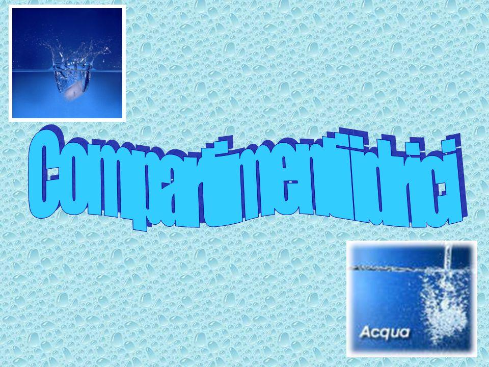 Liquido plasmatico Plasma Liquido interstiziale Liquido intracellulare Membrana plasmatica Endotelio capillare