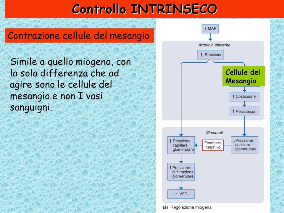Controllo INTRINSECO Contrazione cellule del mesangio Simile a quello miogeno, con la sola differenza che ad agire sono le cellule del mesangio e non I vasi sanguigni.