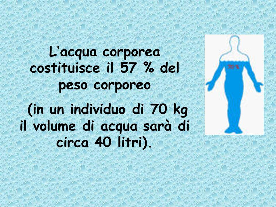 L'acqua corporea costituisce il 57 % del peso corporeo (in un individuo di 70 kg il volume di acqua sarà di circa 40 litri).