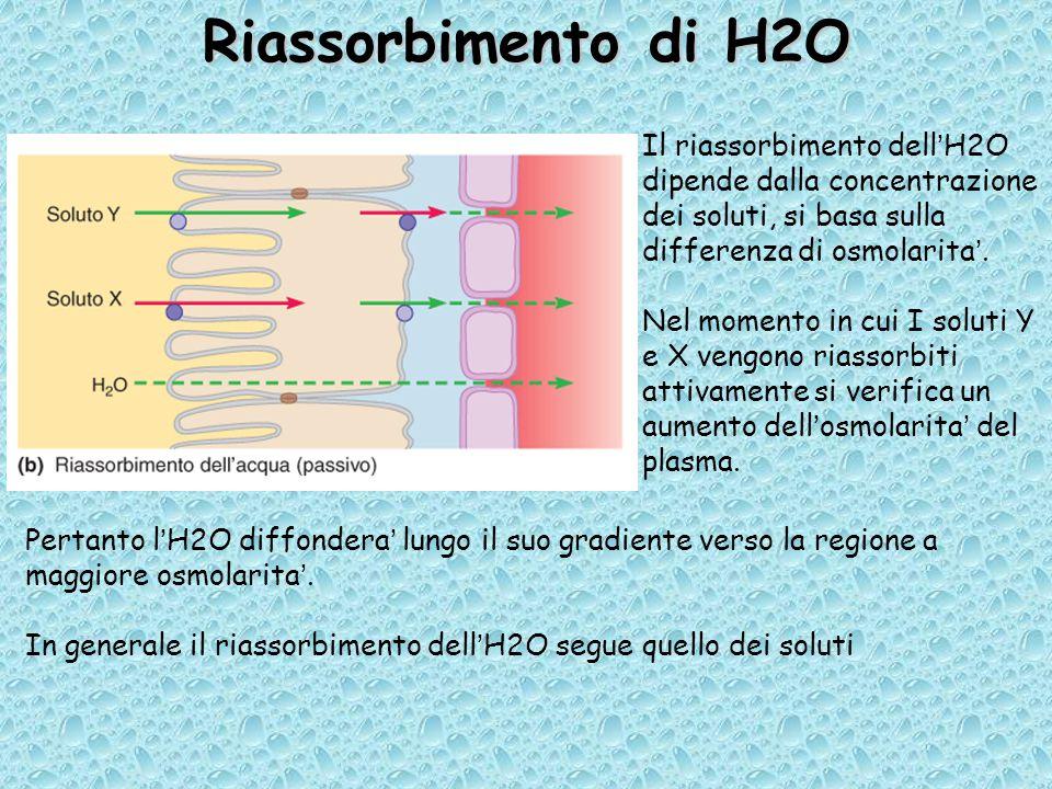 Riassorbimento di H2O Il riassorbimento dell'H2O dipende dalla concentrazione dei soluti, si basa sulla differenza di osmolarita'.