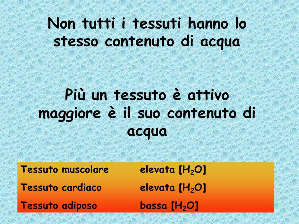 Non tutti i tessuti hanno lo stesso contenuto di acqua Più un tessuto è attivo maggiore è il suo contenuto di acqua Tessuto muscolareelevata [H 2 O] Tessuto cardiacoelevata [H 2 O] Tessuto adiposobassa [H 2 O]