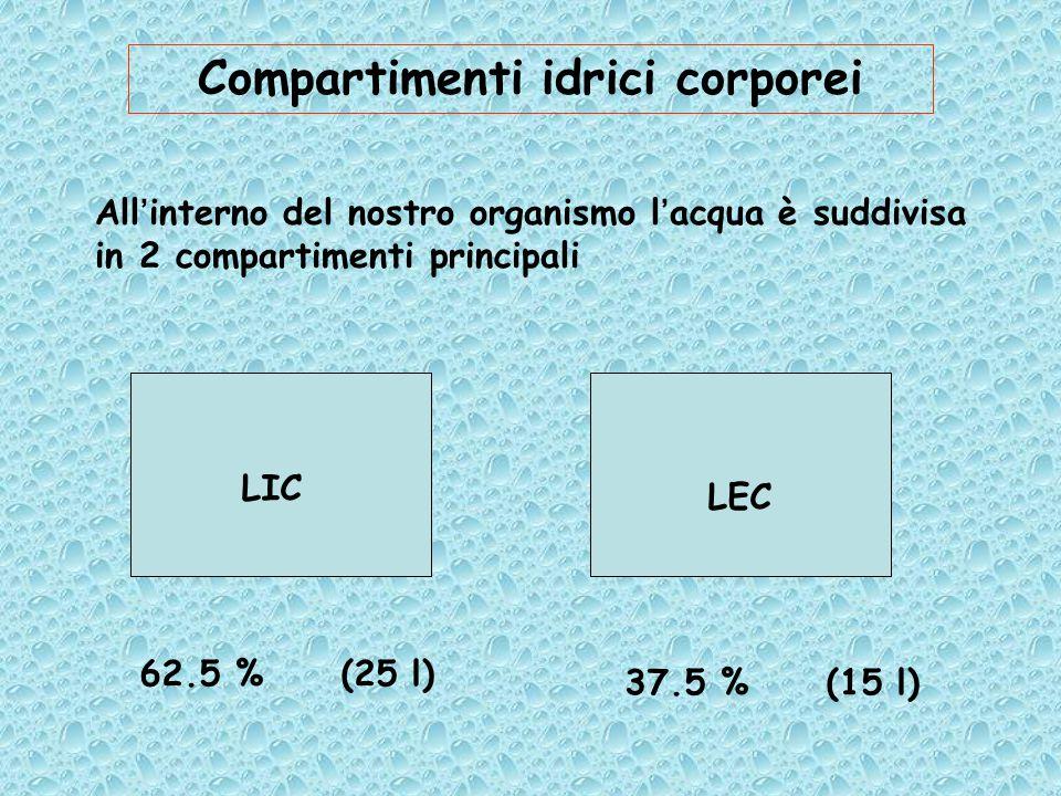 All'interno del nostro organismo l'acqua è suddivisa in 2 compartimenti principali Compartimenti idrici corporei LIC LEC 62.5 % (25 l) 37.5 % (15 l)