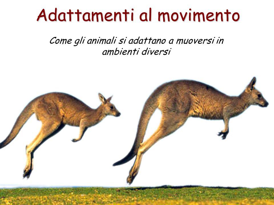 Adattamenti al movimento Come gli animali si adattano a muoversi in ambienti diversi